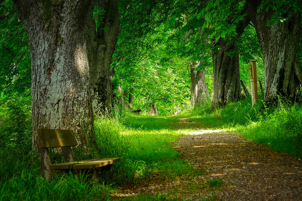 A meandering forest path leads to a bench where Highly Sensitive Persons can find calm.