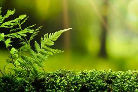 Beautiful Green Moss and Fern