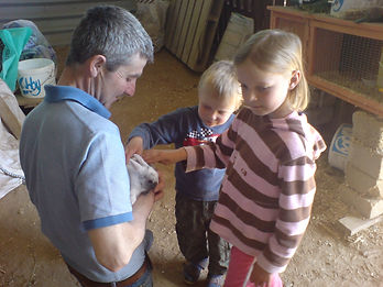 Children animal petting nn holiday at Tregolls Farm Cornwall