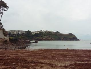 Half Term Fun on a Cornish Beach