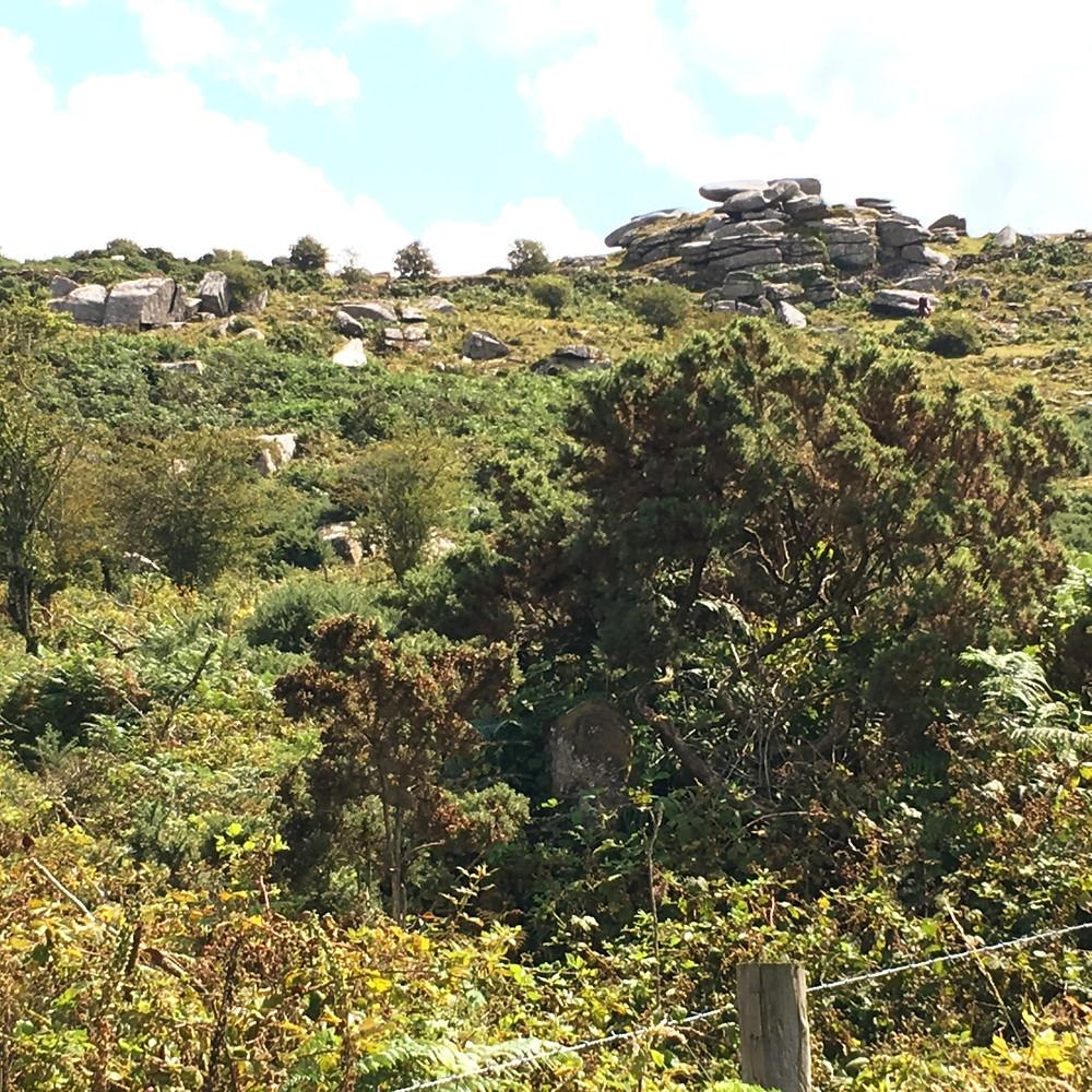 A piece of Cornish moorland Saints Walk Tregolls Farm