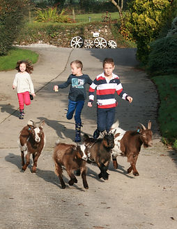 Holidaying children at Tregolls Farm enjoying the freedom of the outdoors