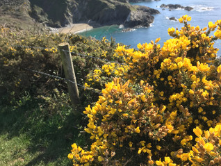 Cornwall is Coming Alive!