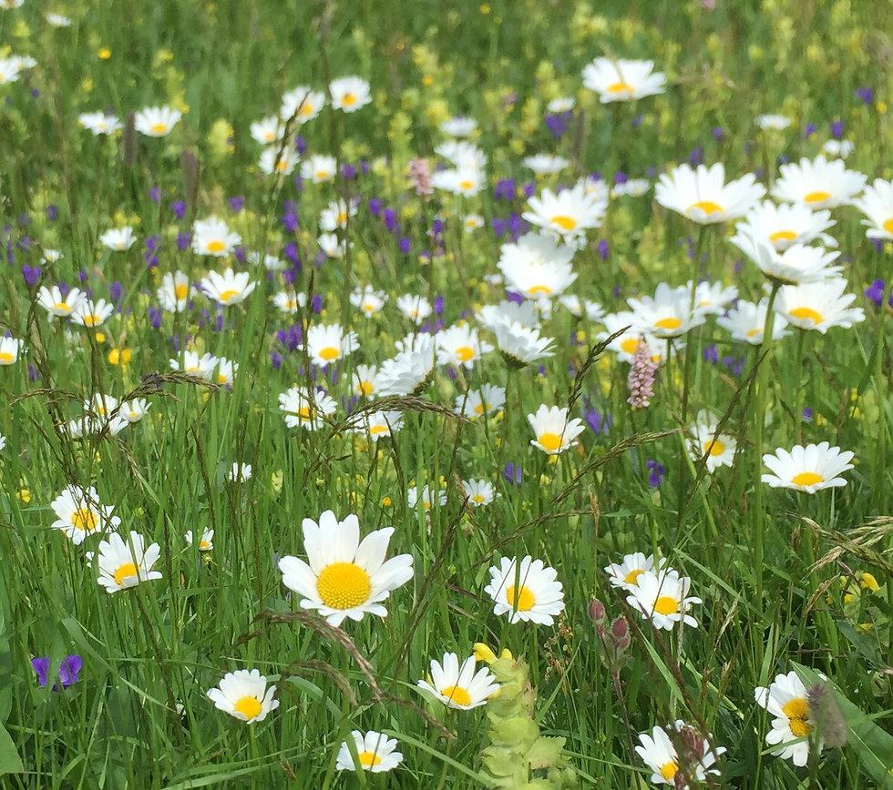 Blumenwiese im Engadin