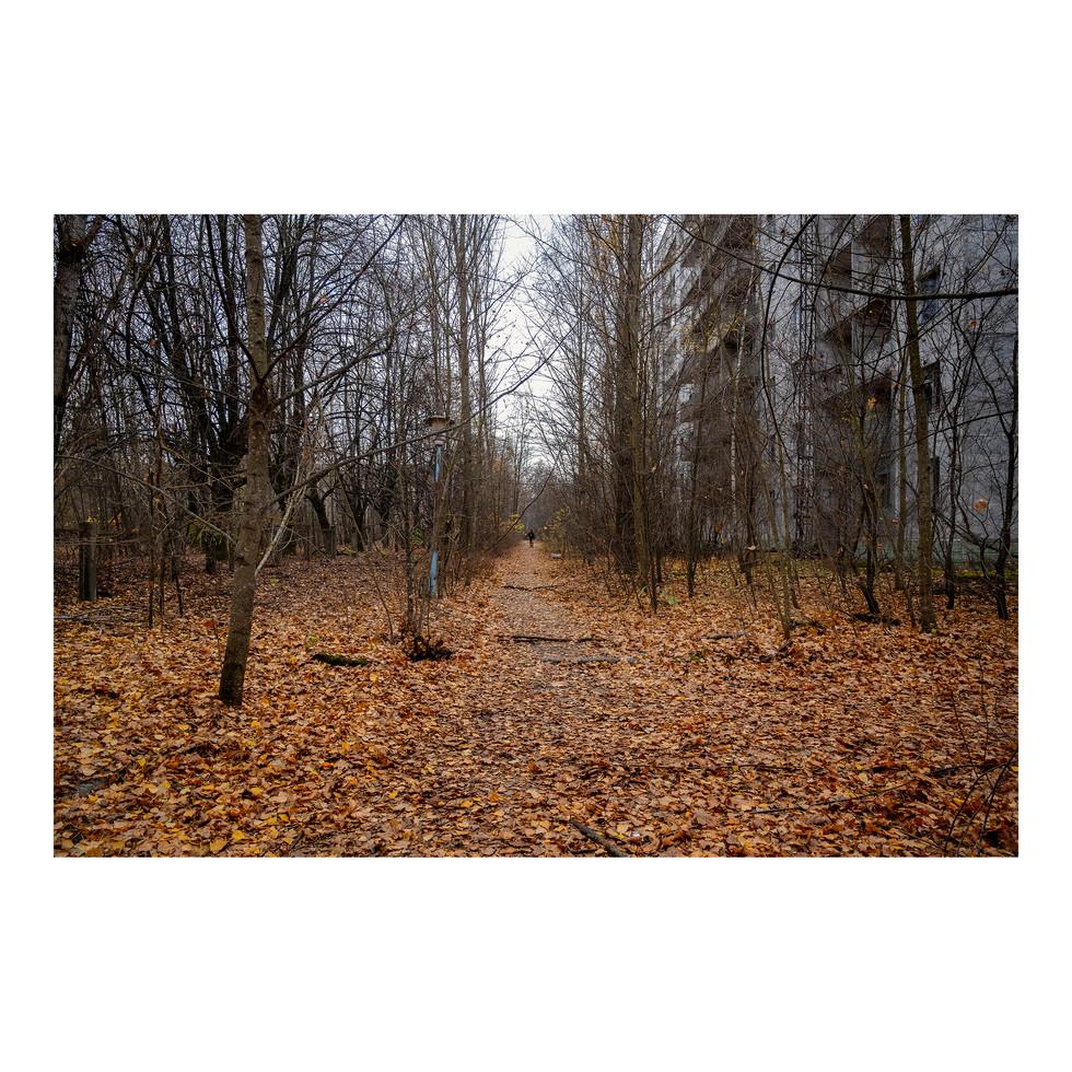 En 32 ans, les avenues de Pripyat se sont transformées en forêts. La nature est vraiment la plus forte. Un cas unique qu'examinent attentivement les Japonais suite à l'accident de Fukushima de mars 2011.