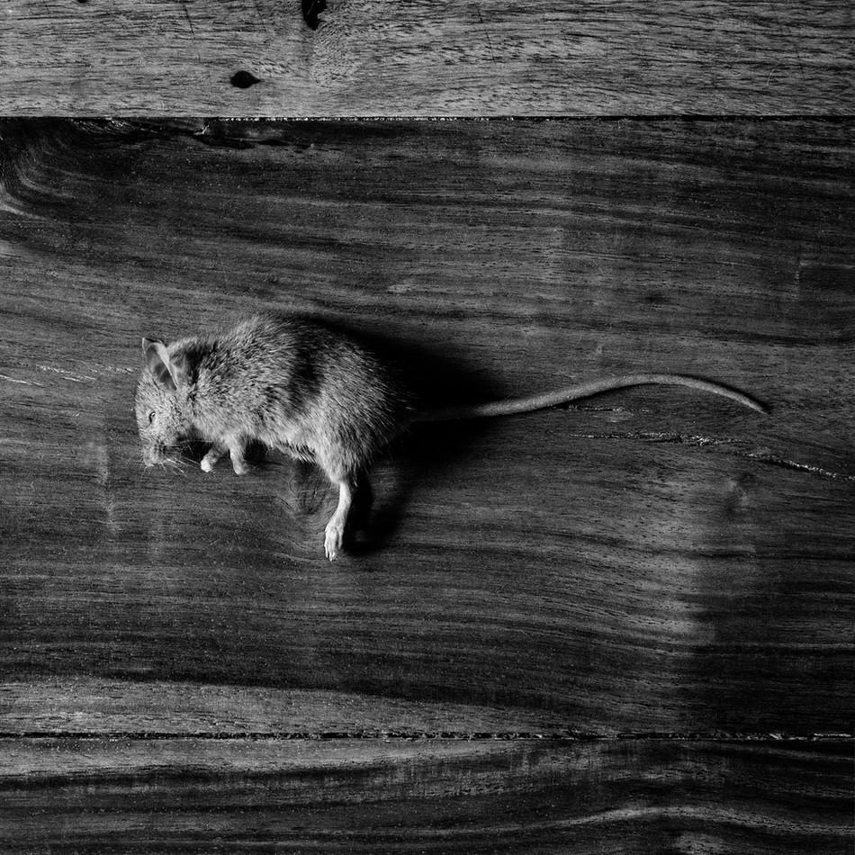 Drop Dead Mouse