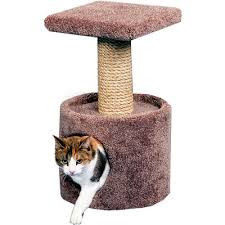 Scratching posts and pet toys