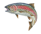 rainbow-trout-fly-fishing-fishing_edited