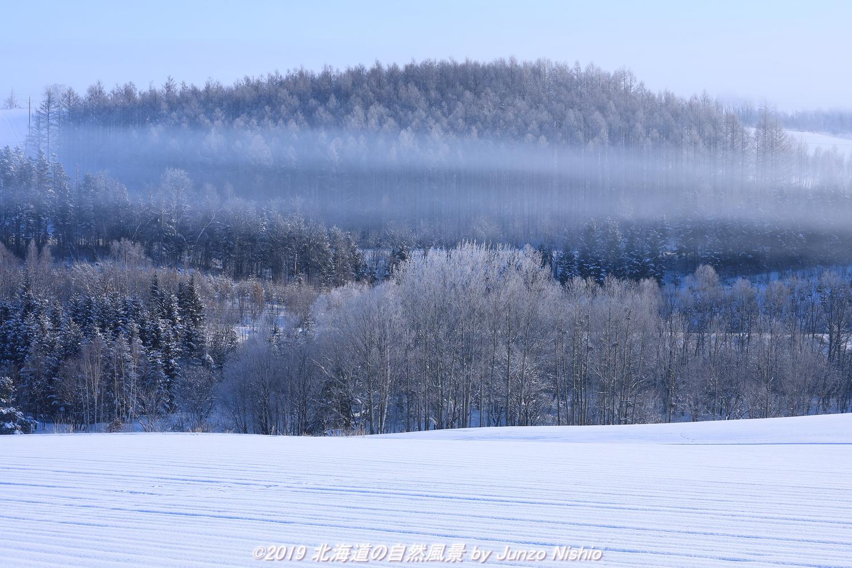 たゆとう厳冬の朝霧