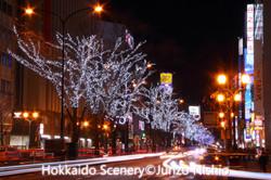 札幌駅前通りホワイトイルミネーション_1