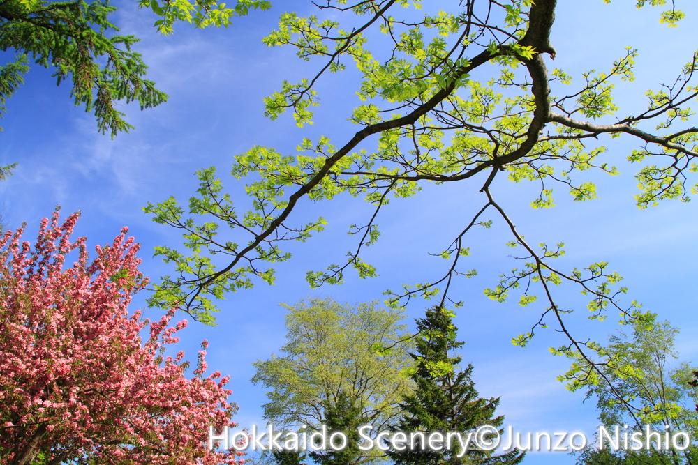 新緑1_札幌市北区