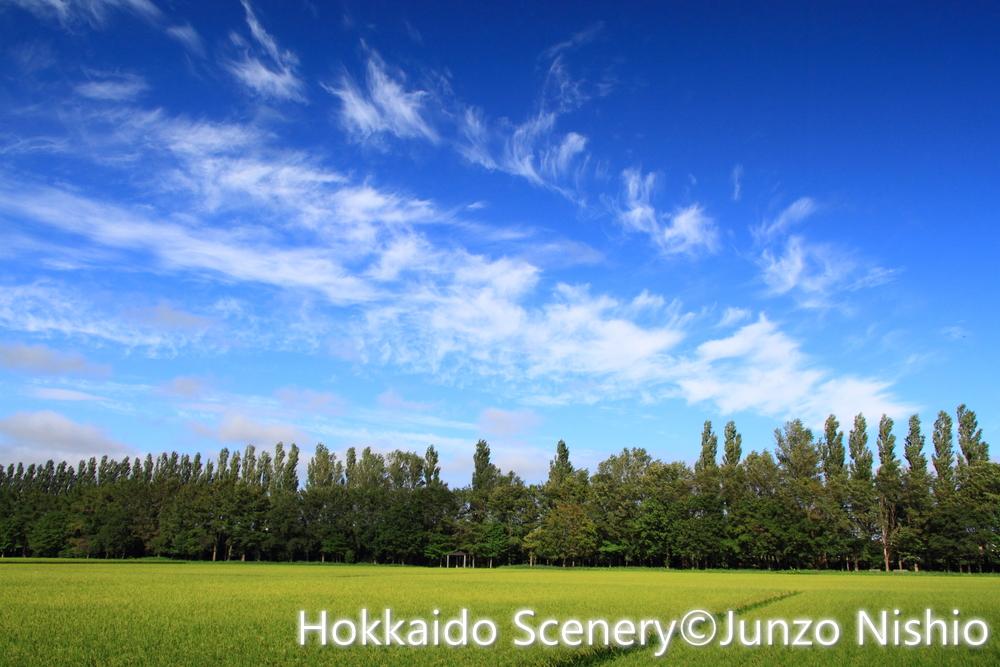 流れる夏雲と水田_札幌市北区