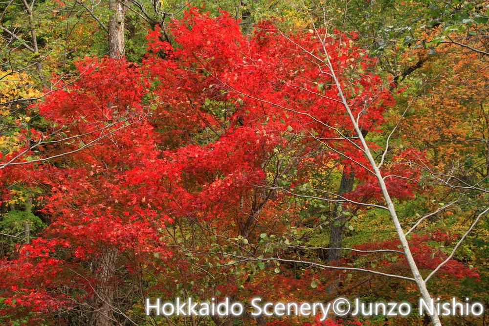 紅葉3_恵庭渓谷