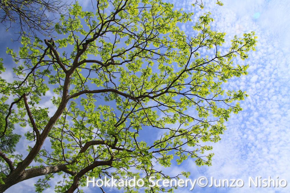 初夏の陽光_札幌市北区