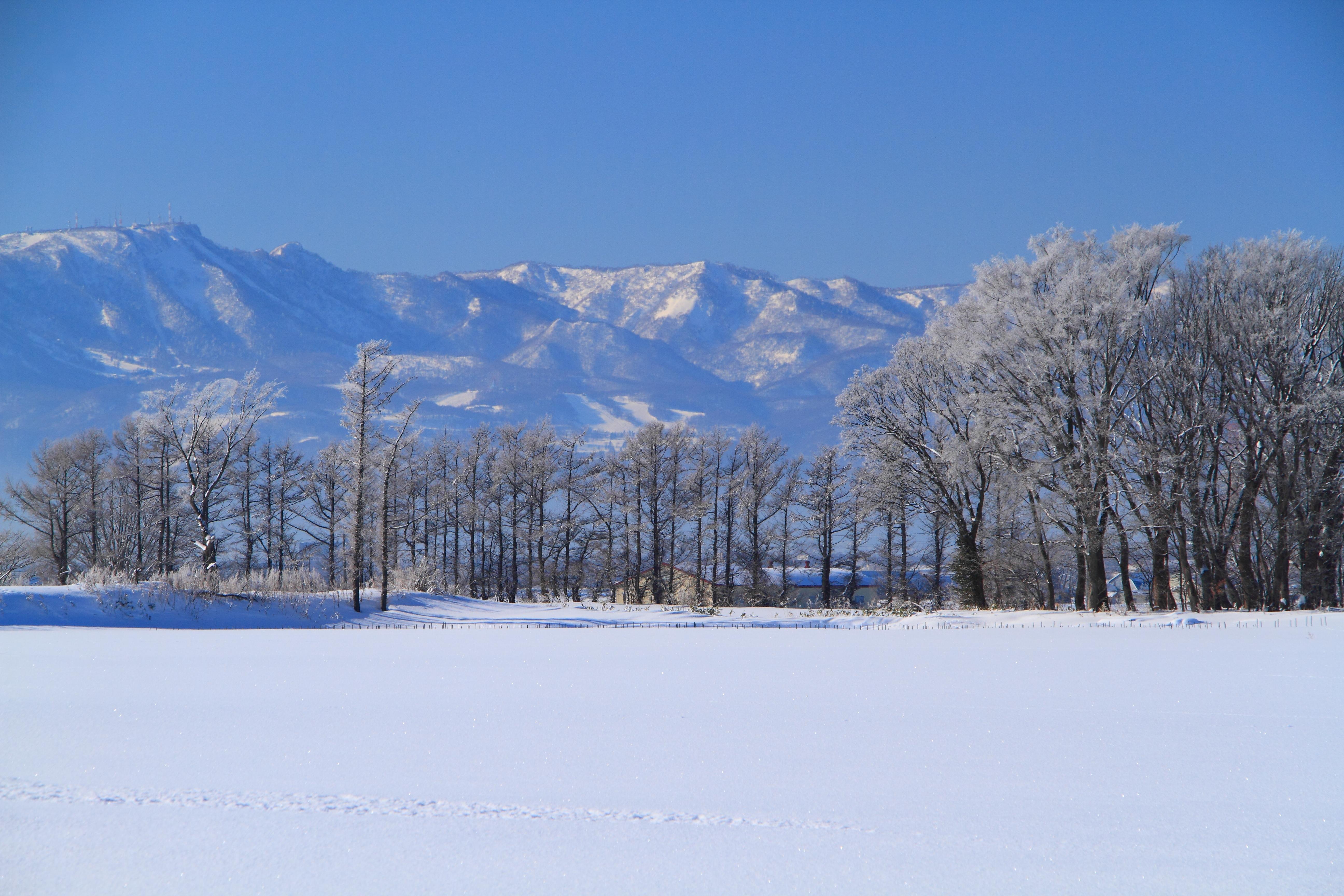 霧氷の朝1_石狩市郊外