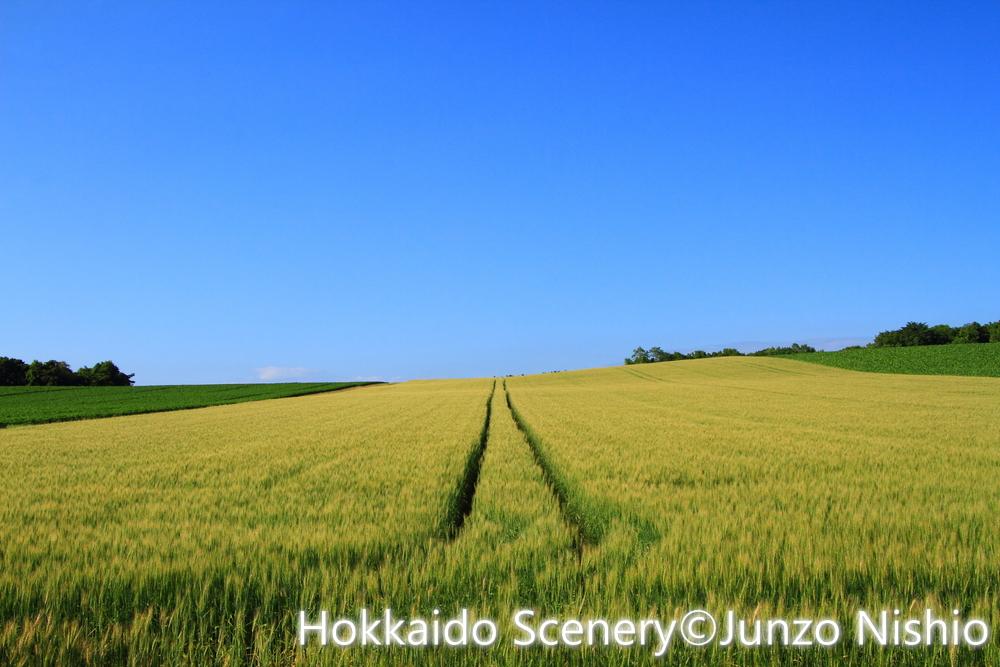 小麦畑の道_石狩市郊外