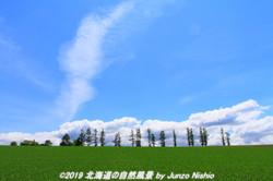 美瑛の初夏 2018年 14