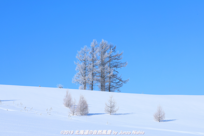 霧氷の五本木(嵐の木)