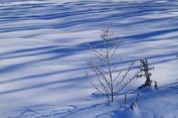 霧氷の朝2_石狩市郊外