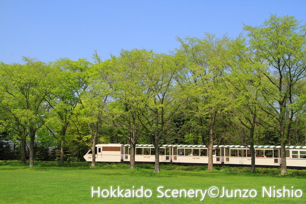 新緑3_札幌市北区