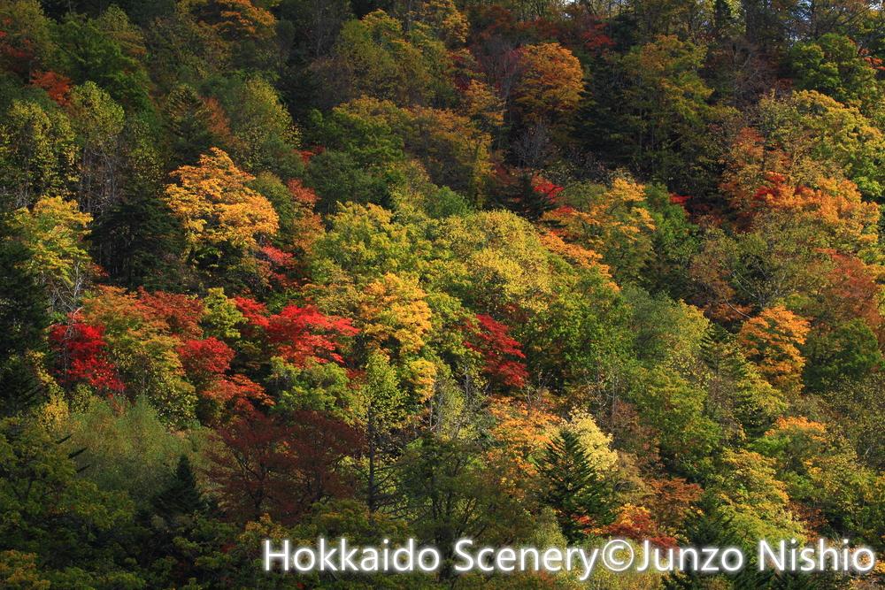 紅葉2_恵庭渓谷