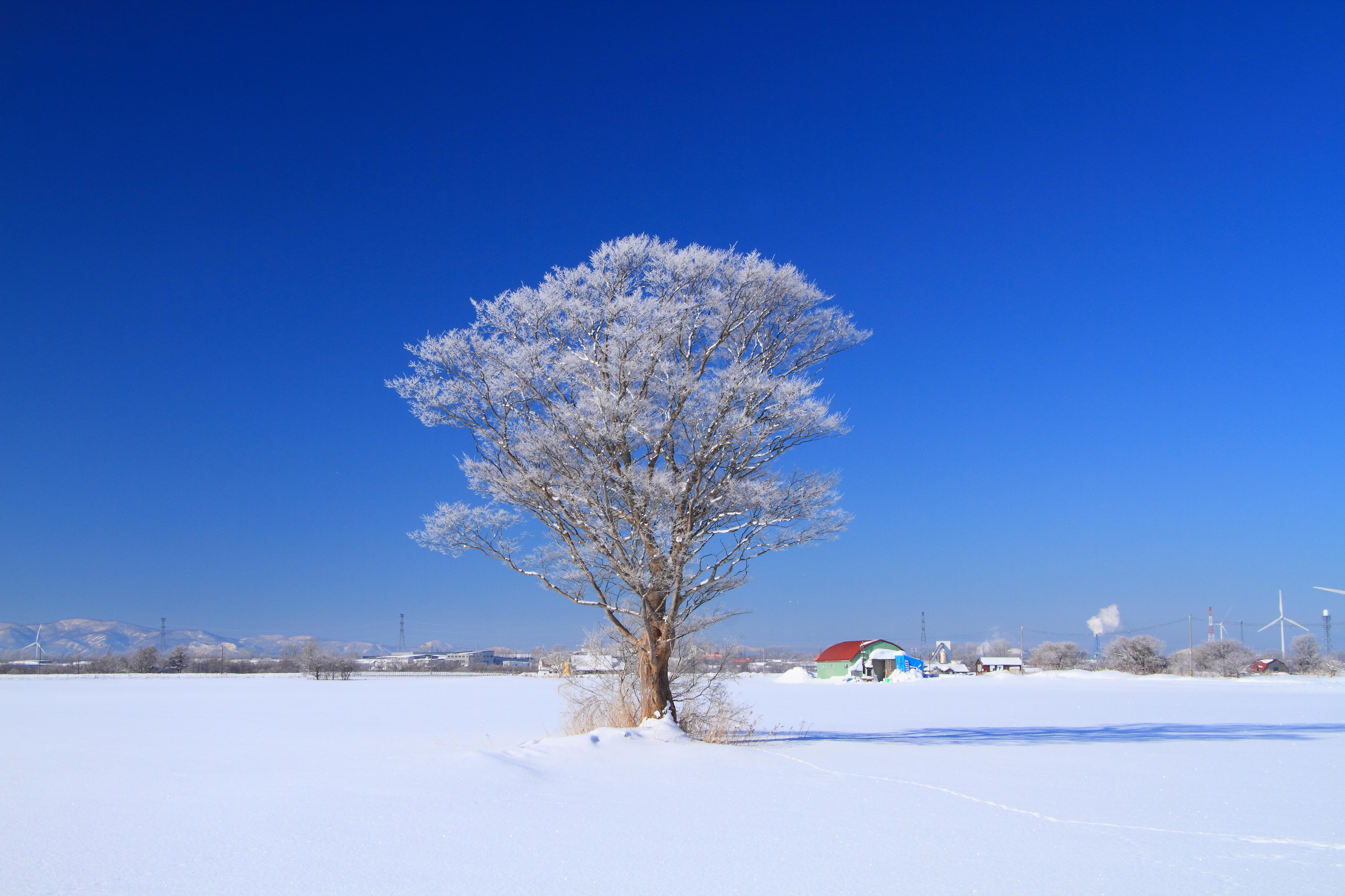 霧氷の朝5_石狩市郊外