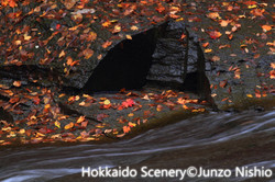 晩秋の彩り_恵庭渓谷