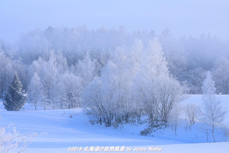 霧氷の木立