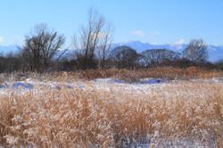 初冬の原_石狩市郊外