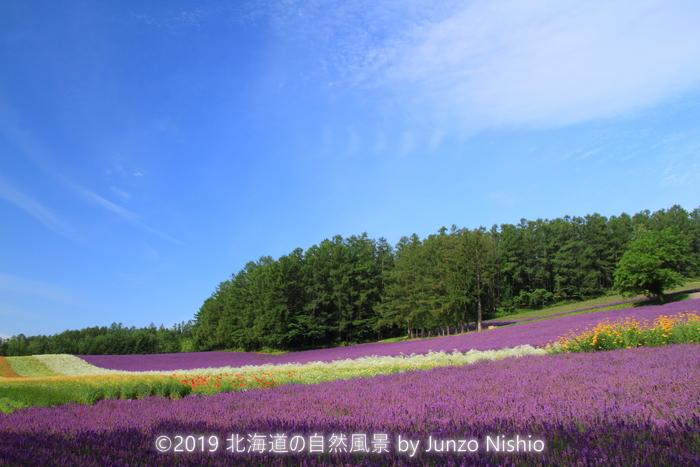 ファーム富田9_富良野