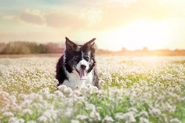 Séance chien - Virginie Peigne photographe