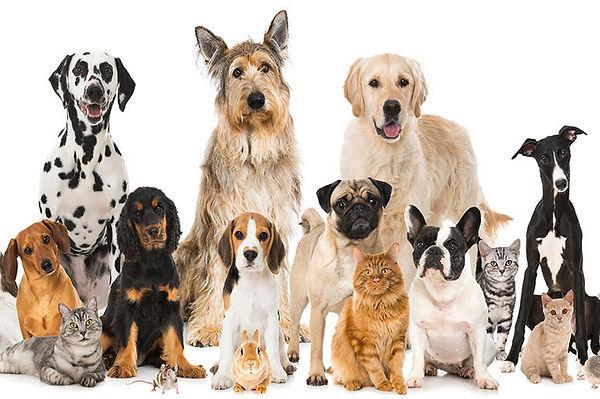Many_Pets.jpg