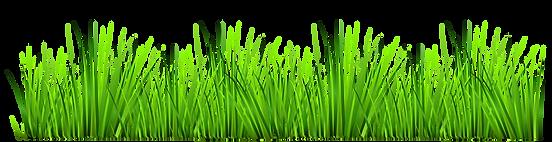 grass-clipart-transparent-grass-clipart-