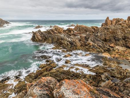Tarkine in Tasmania