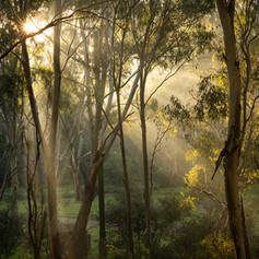 Darebin Parklands, Alphington, Melbourne, VIC