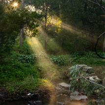 Darebin Parklands, Alphington, Victoria