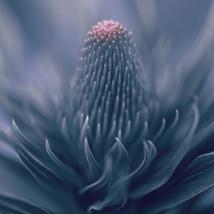 Macro image of a plant