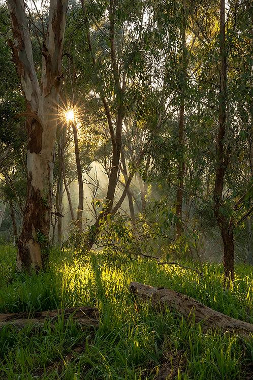 Darebin Bushland