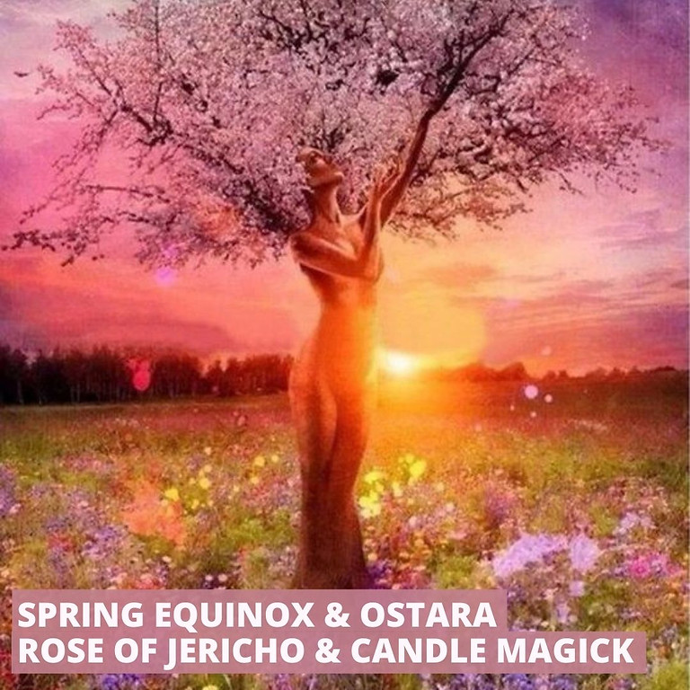 Spring Equinox & Ostara Ceremony: Sacred Rose Of Jericho & Candle Magick
