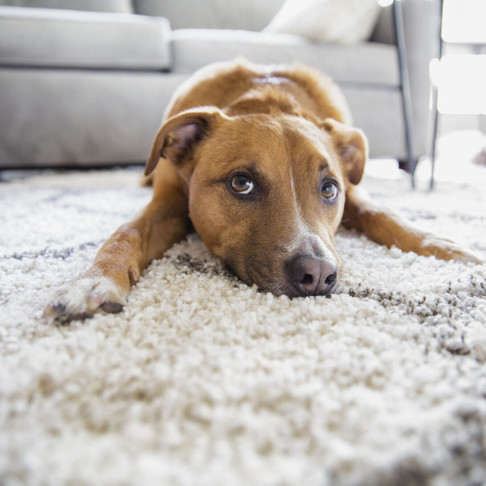Buying with Your Pets in Mind