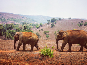 Leadership and the Elephant Matriarch