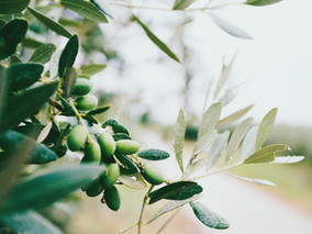 The Story Behind the Name- Olive Branch