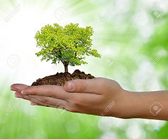 13187235-growing-tree-in-hand-on-green-b
