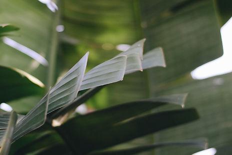 Nature, plants, nature photography