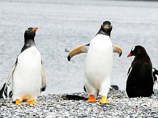 pinguinera5.jpg