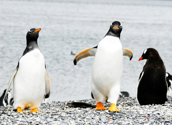 Avistaje de Pingüinos