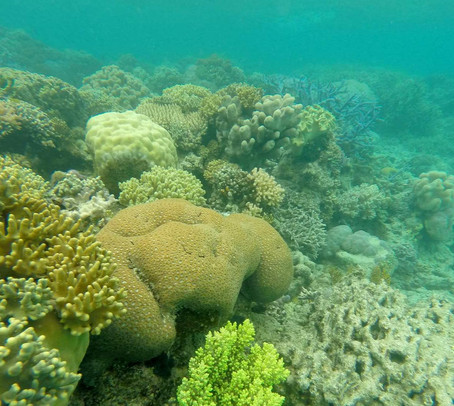 Article: Scientists awarded grant to investigate how microbiomes can help species withstand climate