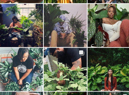 Plant Care in Black Mental Wellness