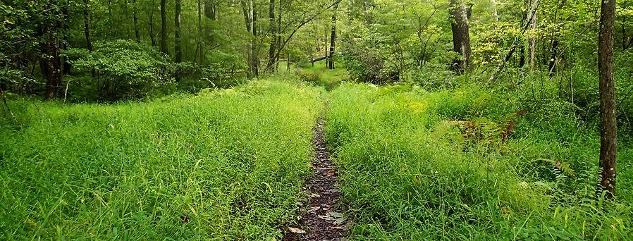 DPJ-Trails.jpg