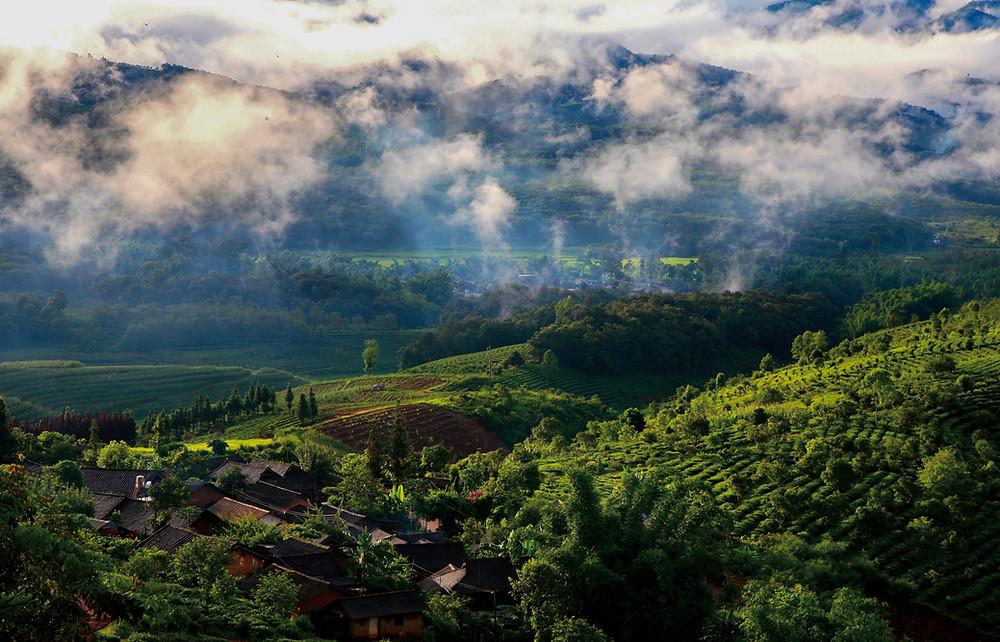 Jingmai Tea Mountain in Pu'er